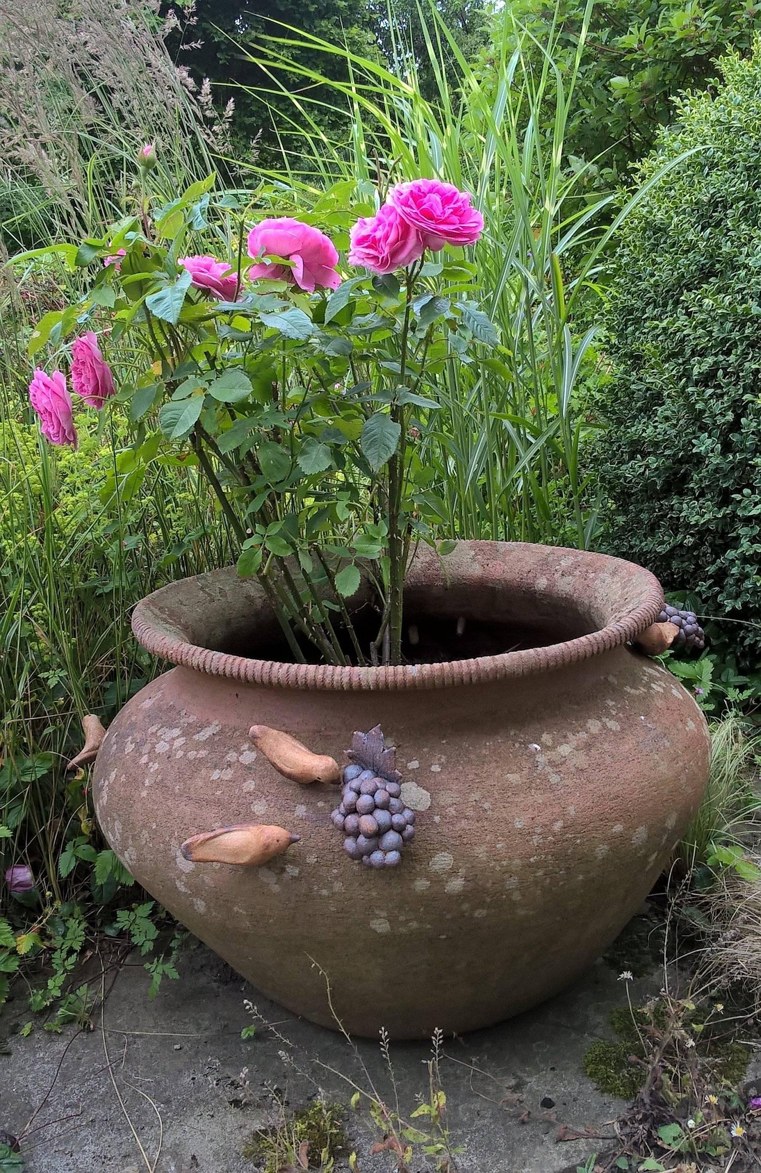 Bird and Grape pot