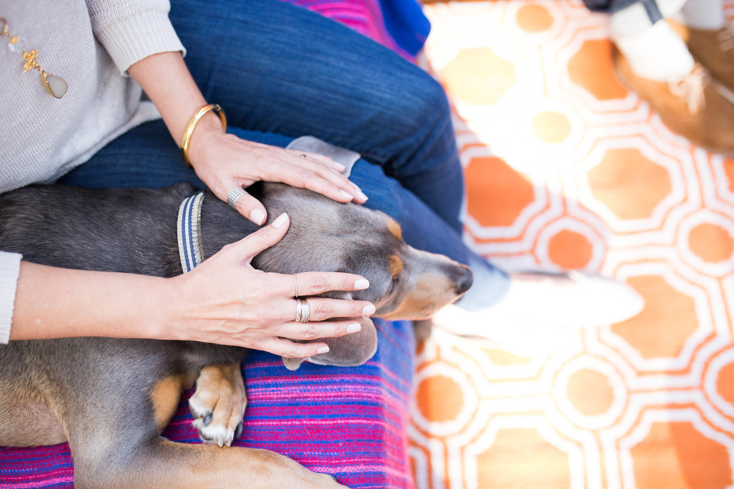 photo session add on: $50 - Does your pet get stressed or anxious in public? As a certified Reiki Master, I offer Reiki for pets to calm their energy before your photo shoot. This is an optional service that can be added to any type of photo session and takes 20 minutes.