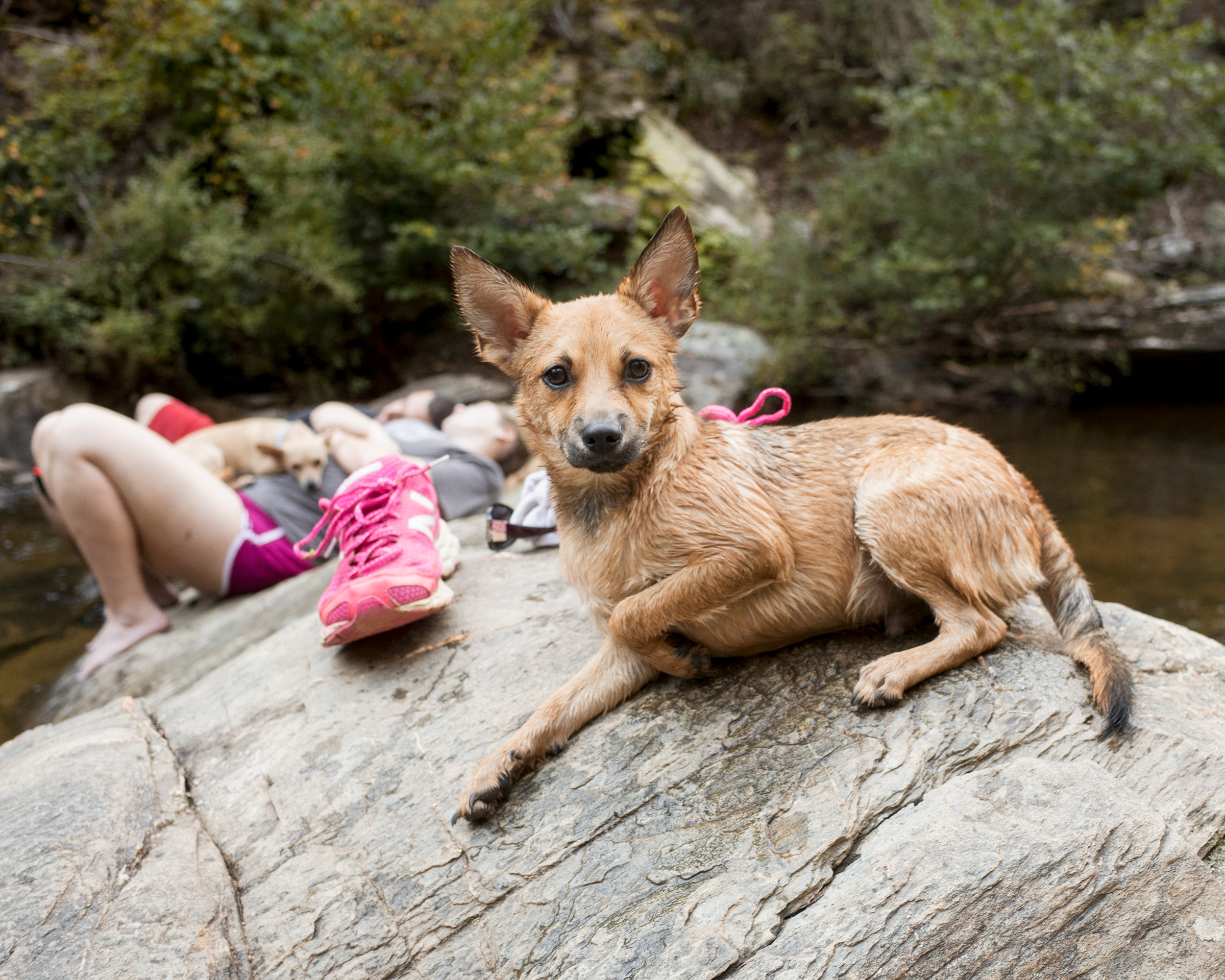 We met a pup called Benihana at the swimming hole.