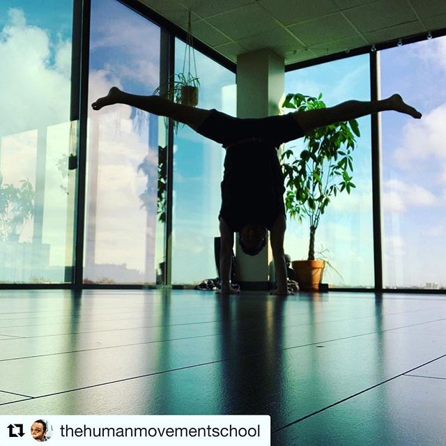 """We are excited to have Zach join us next Saturday! Save your spot now... link in bio🧚♀️🧚♂️ #Repost @thehumanmovementschool with @get_repost ・・・ Saturday May 11th from 2-4pm I'm teaching Easier Handstand by Working Smarter, Not Harder @montroseyogacoop ⠀ ⠀ Handstands aren't necessarily about working harder—more """"core"""", more upper body strength, more hard work. ⠀ ⠀ Don't misunderstand me. I'm not saying they're effortless. I'm saying that if we're intelligent about how we work, they can be more about efficiency than just trying to work harder. ⠀ ⠀ Link for more info, and to sign up, in bio (if I did it correctly) EDIT: I don't know how to put links in bio correctly. DM me if you need help finding the link. ⠀ @centreforspatialmedicine #spatialmedicine #innerspace #opentoconnect #awareness #yoga #yogaeveryday #yogaeverydamnday #yogaeveryblessedday #handstand"""