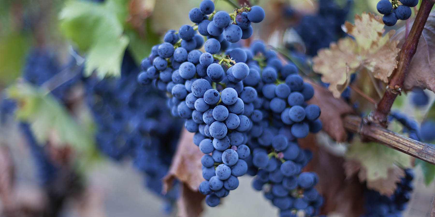 Rogue Valley Wineries