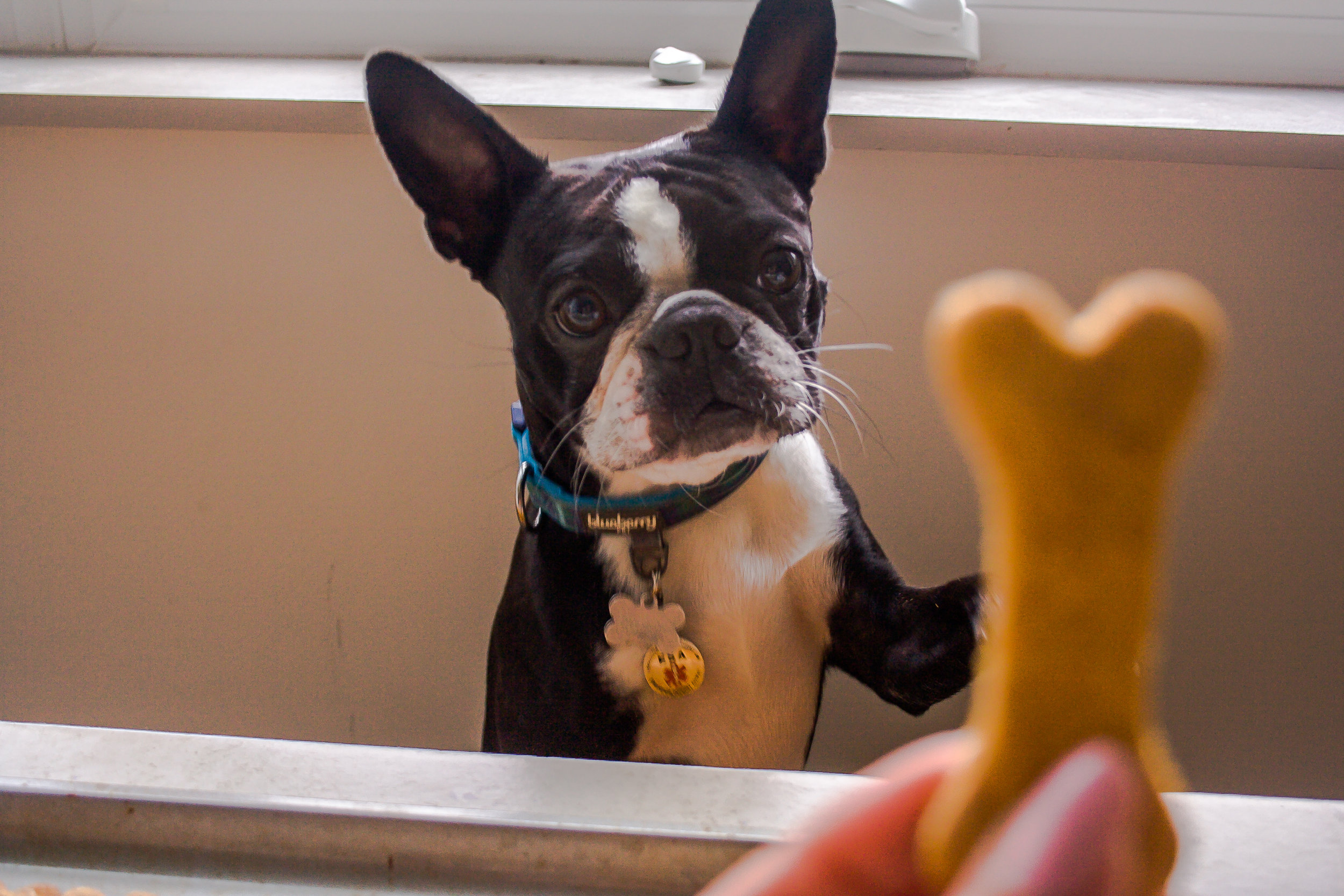 Sweet Potato Almond Butter Dog Biscuits