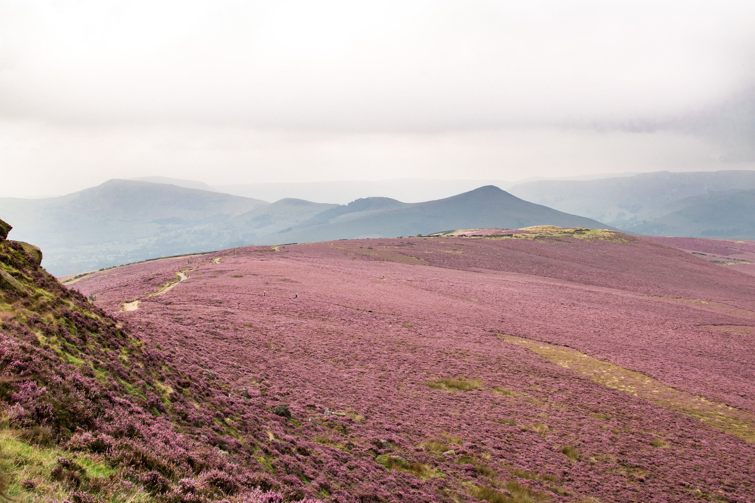 HEATHER AT WIN HILL