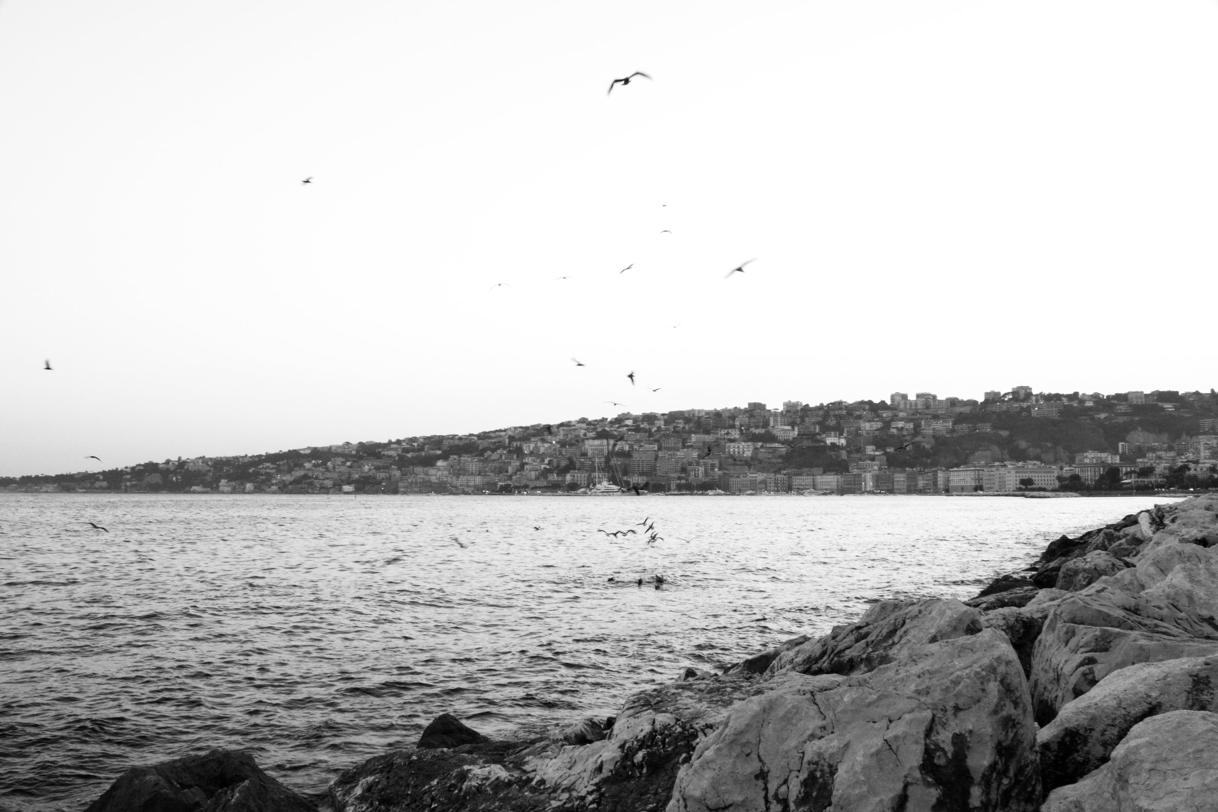 BIRDS OVER THE COAST OF NAPLES