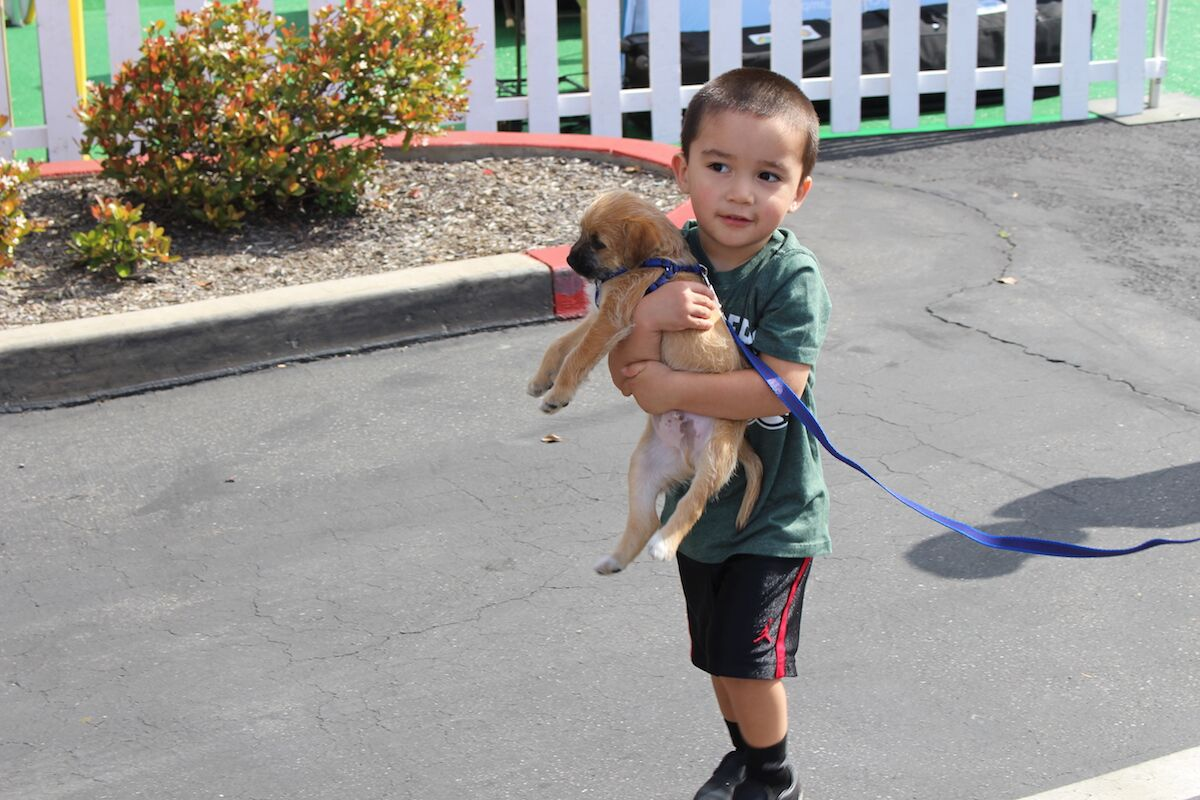 kid with puppy in dog expo.JPG