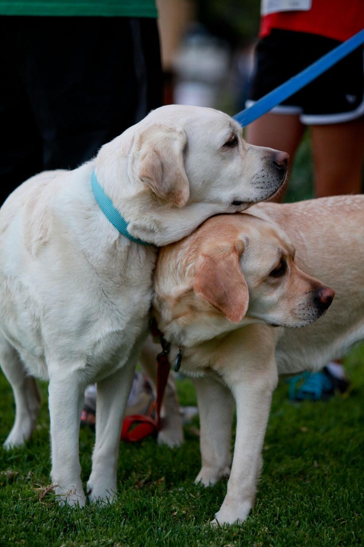dogs cute.jpg