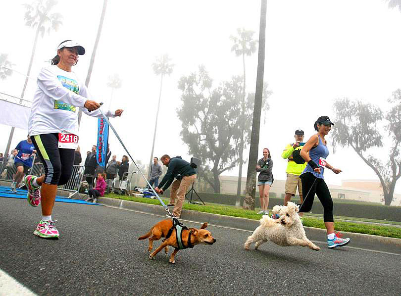 Spirit Run is going to the dogs, happily…and for our schools - Visit Stu News Newport to learn about the benefits, to you and your pooch, of walking or running and participating in the Kriser's Dog Mile.