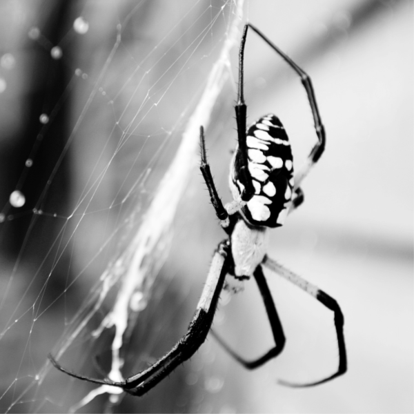 Spider Spider (1).png