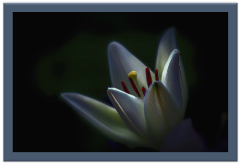 A lily's world view before the light hits it fully