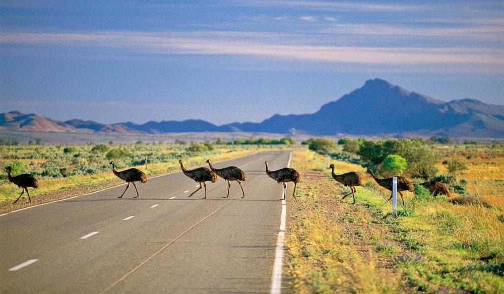 Great-Drives-Of-Australia-The-Flinders-Ranges-2.jpg