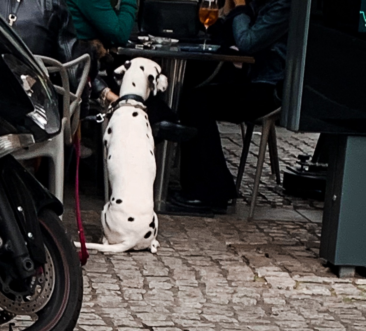 This was the real life Dalmatian I saw in Milan when I had gotten the inspiration for this beautiful course! - It gave me goosebumps! And I knew immediately this course was going to absolutely CHANGE LIVES!