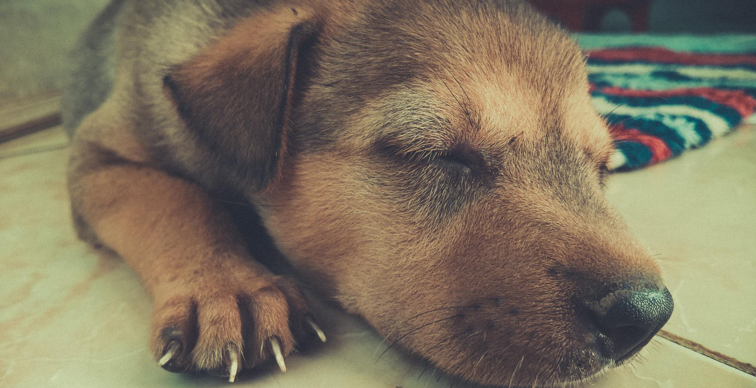 puppy sleeping.jpeg