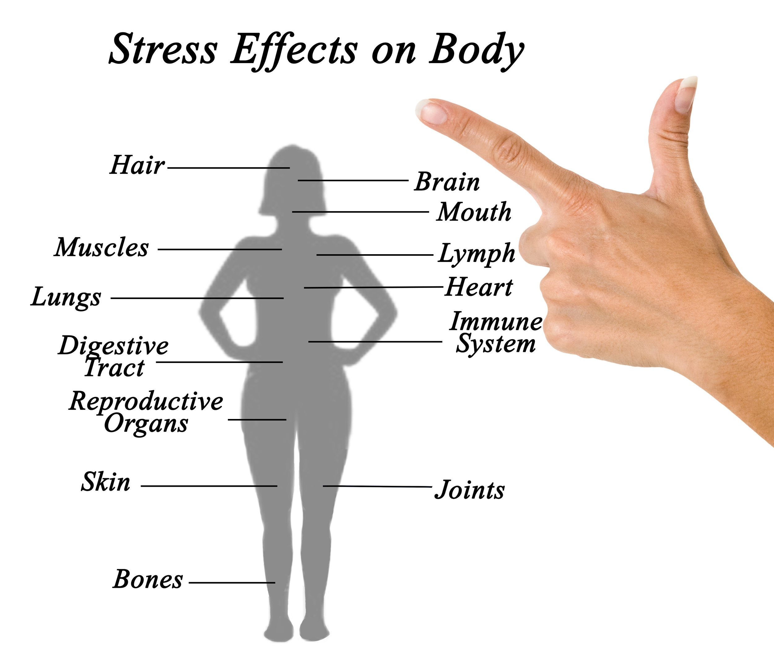 Stress and anxiety in the body