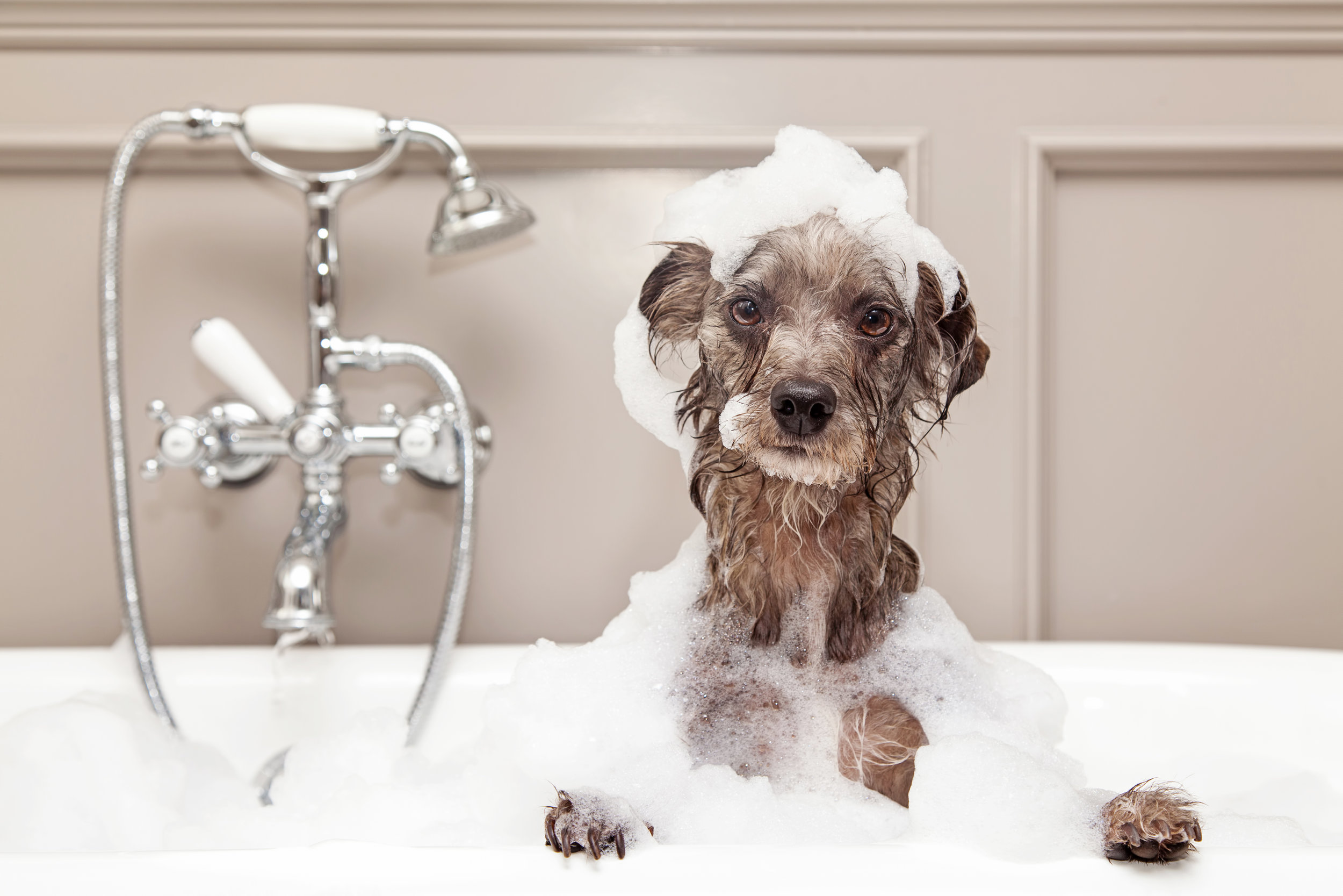 An indulgent bath is definitely stressing this guy out!