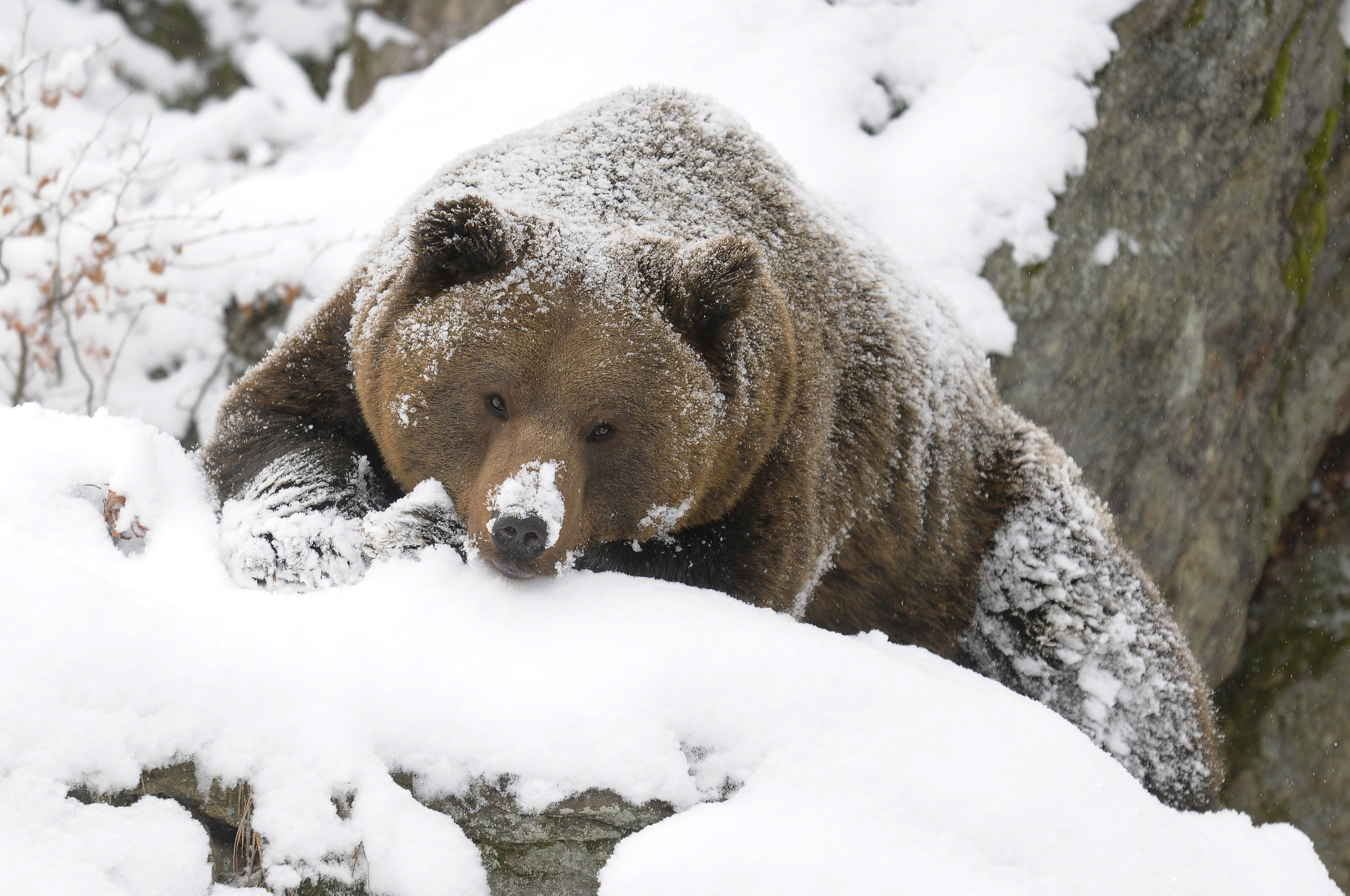 Take it from this hibernation expert: sometimes it's best to just stay in!