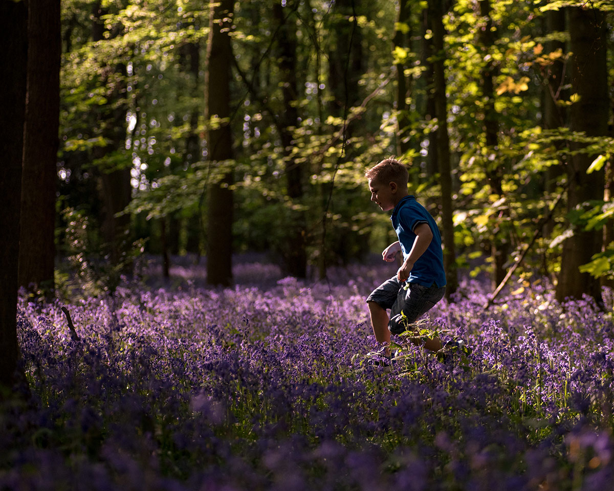 He loved exploring these bluebell woods and the sunlight streaming through the trees really makes this image.