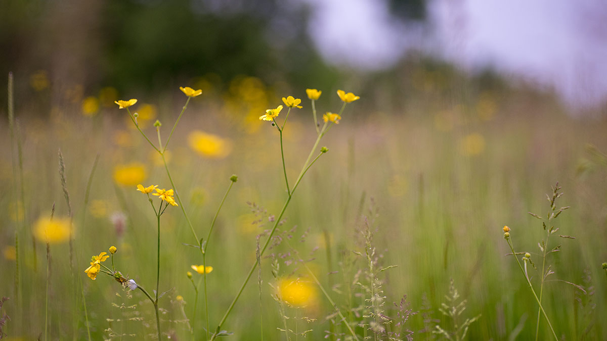 There are so many colourful flowers and things to see in Shipley Country Park