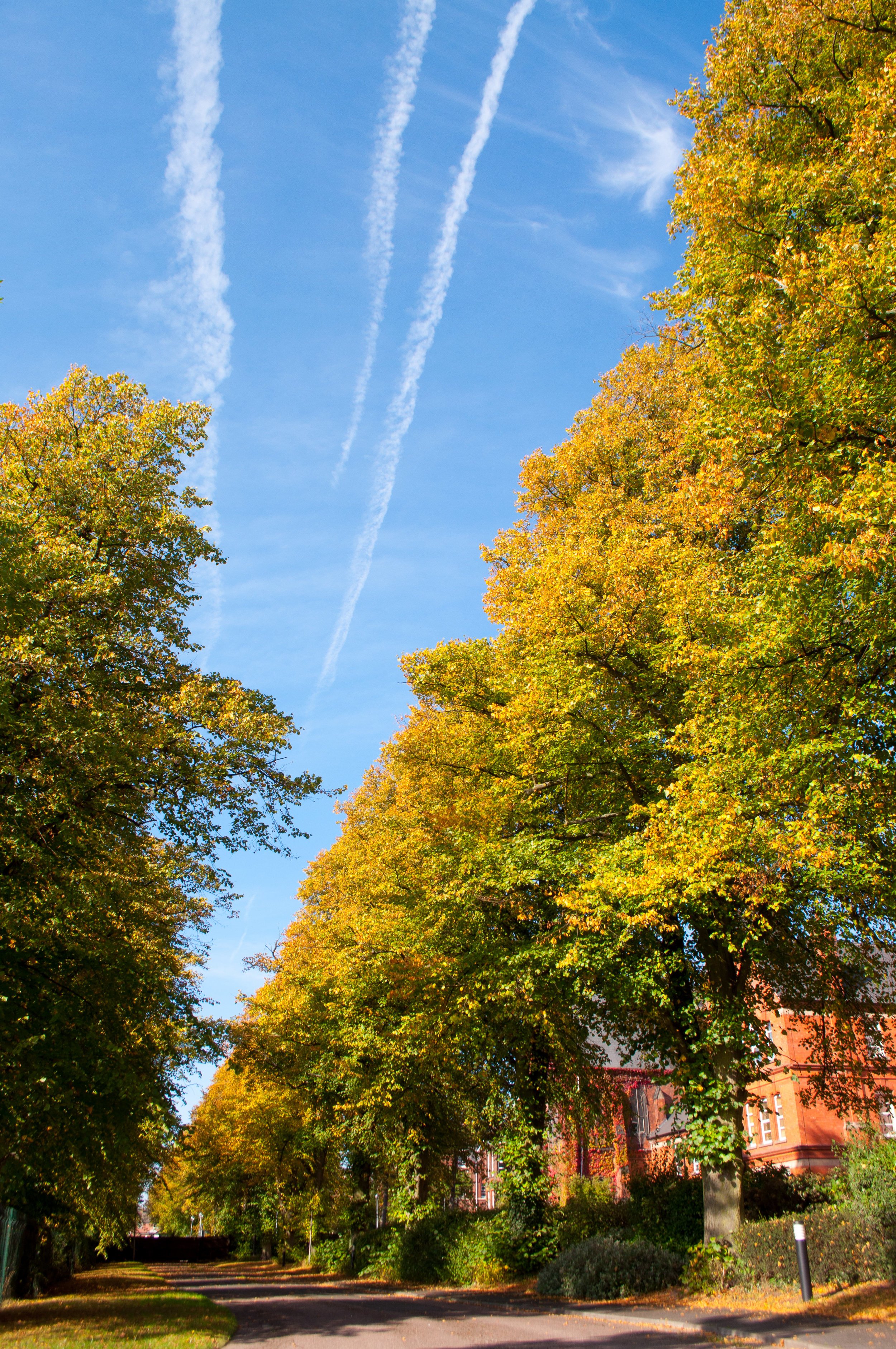 The lines of trees and the plane trails in the sky really draw your eyes through the image to look at the autumn folliage