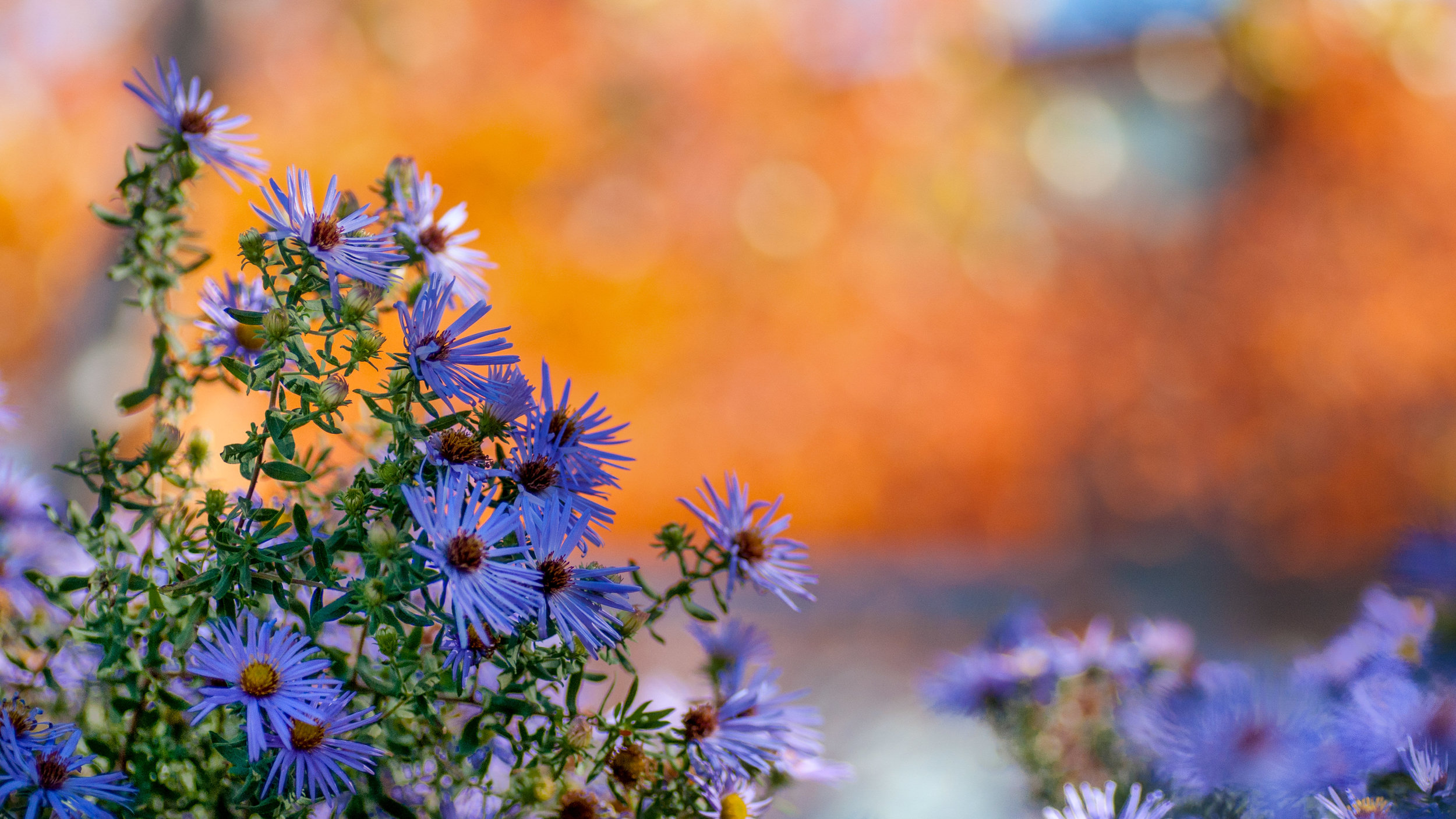 The bright, colourful background really makes this picture of these flowers much more eye catching.