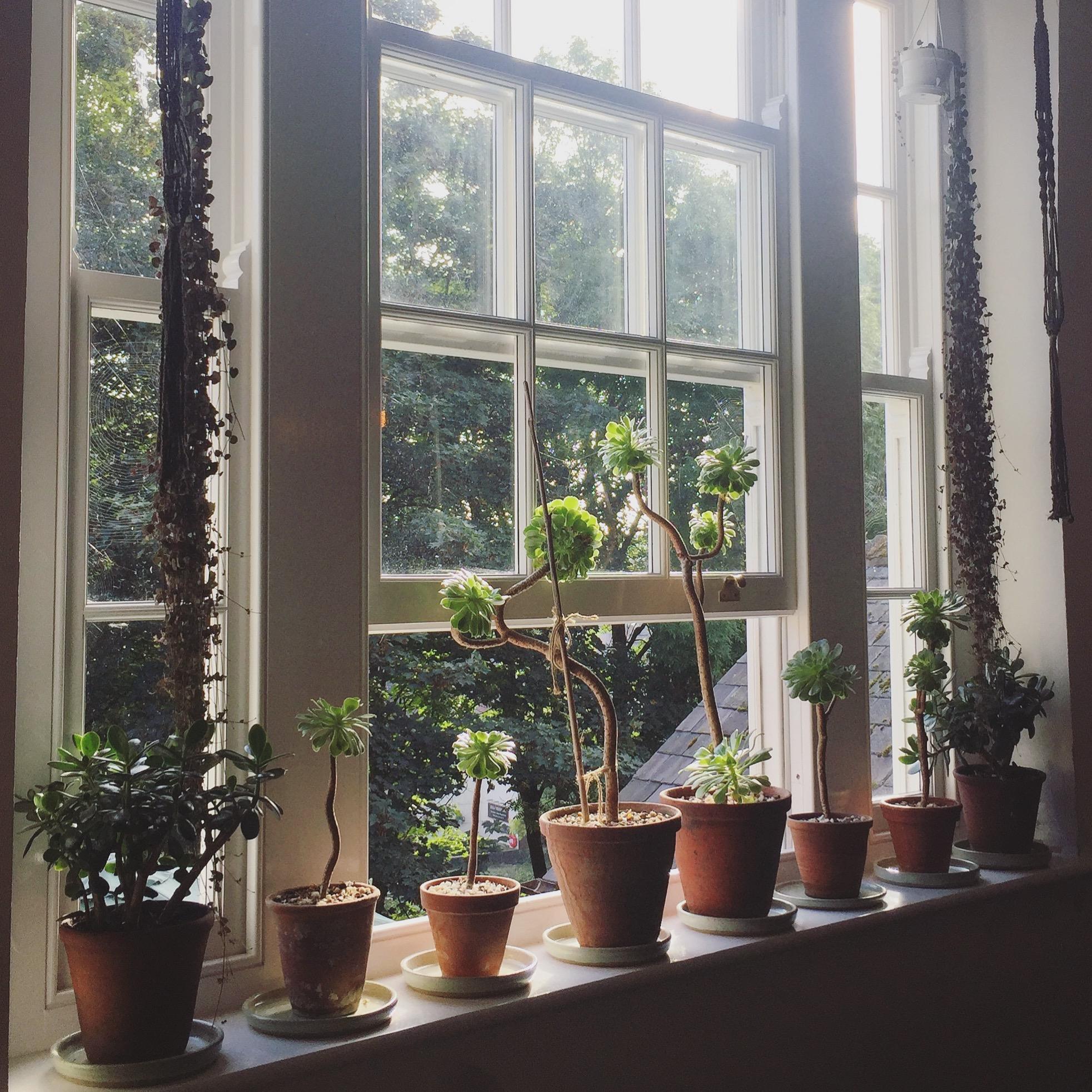 flat w plants.JPG