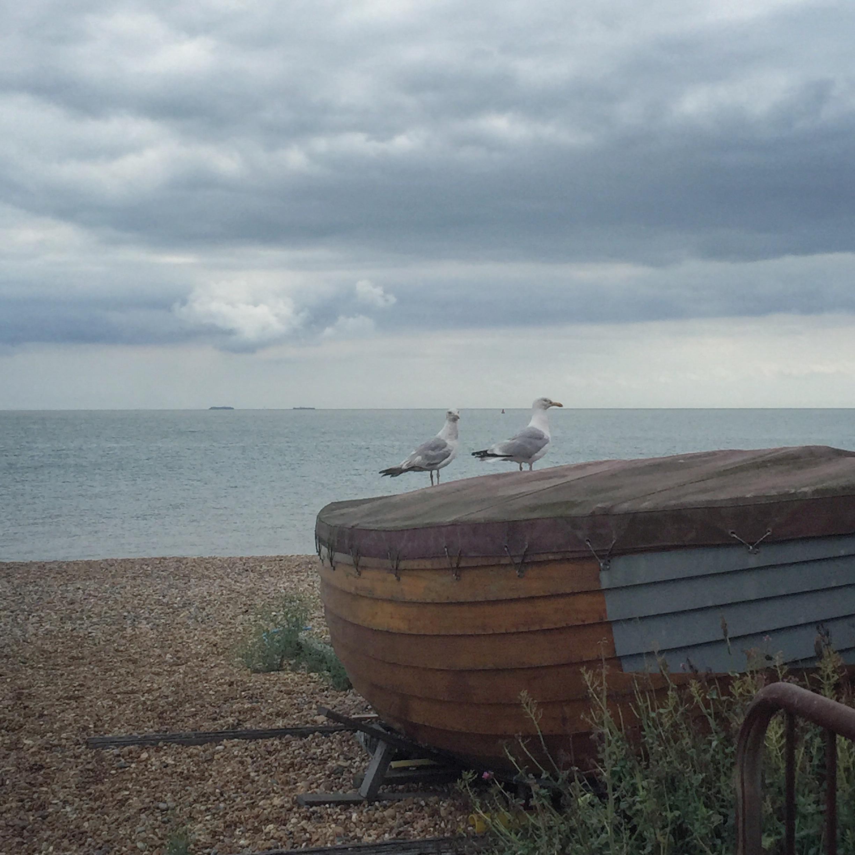 gulls deal .JPG