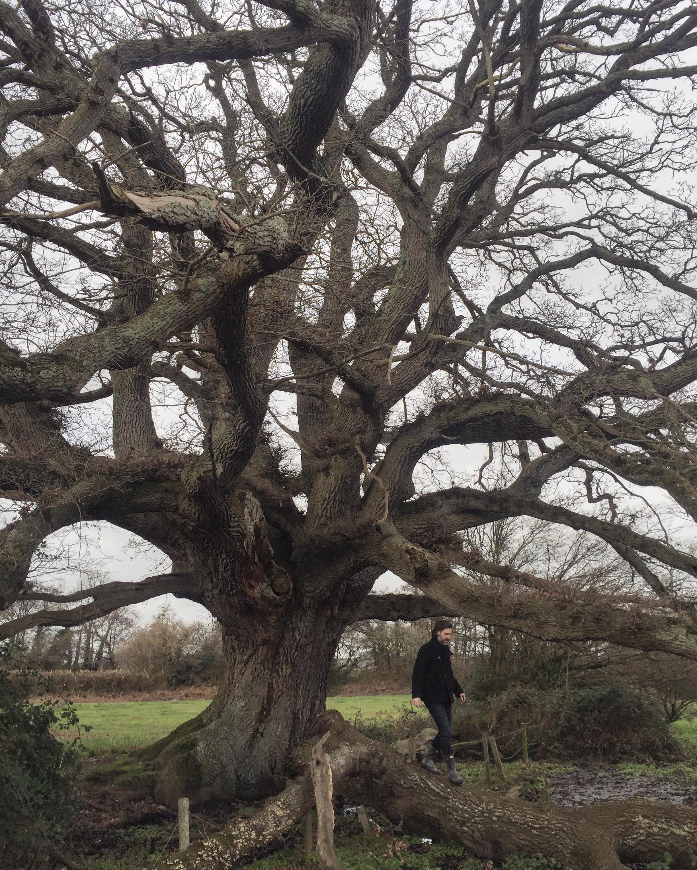 PAUL TREE .JPG