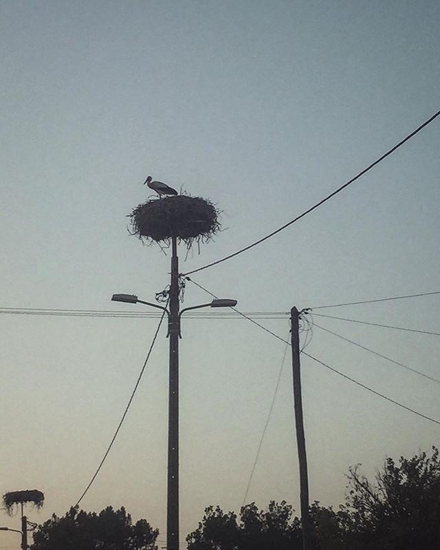 Stalking storks ✨