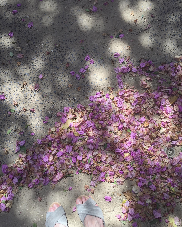 petals .JPG