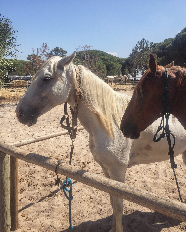 horses white brown .JPG