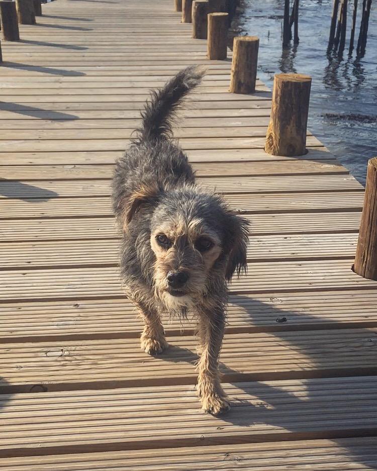 pooch on the pier.JPG
