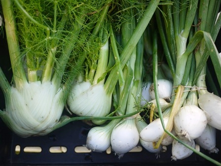 Fennel and large salad onions