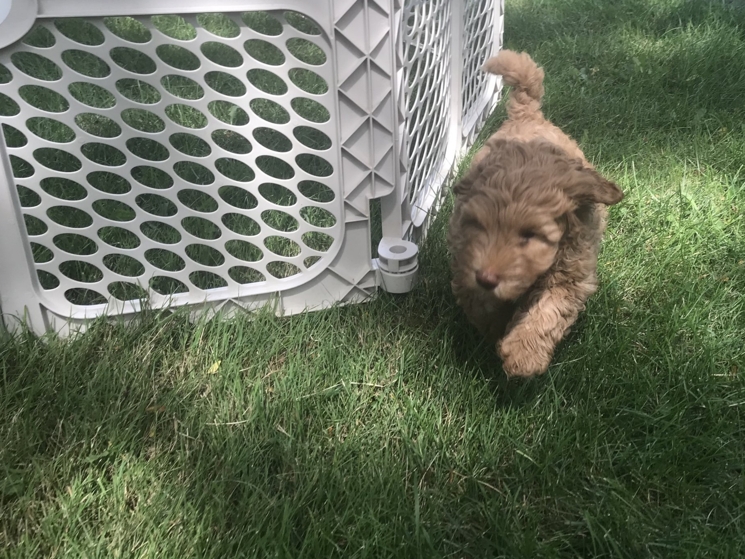 Puppy Play Time!