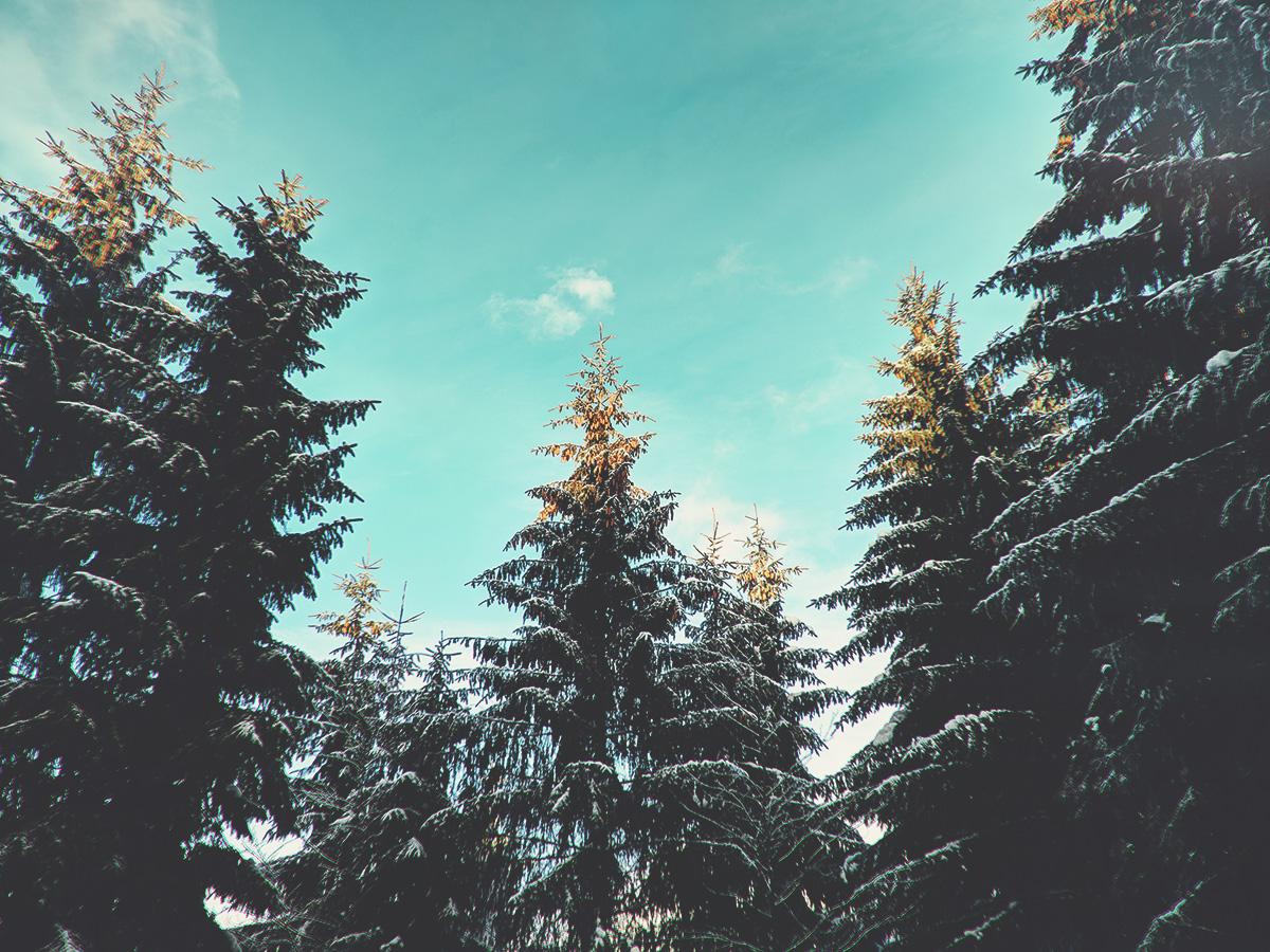 WARDYWORKS_Straja_Trees2_web.jpg