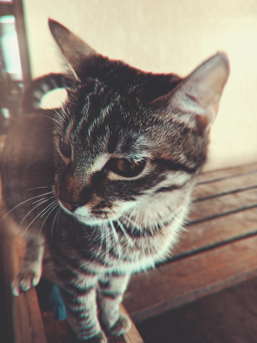 WARDYWORKS_Brasov_Cat01.jpg