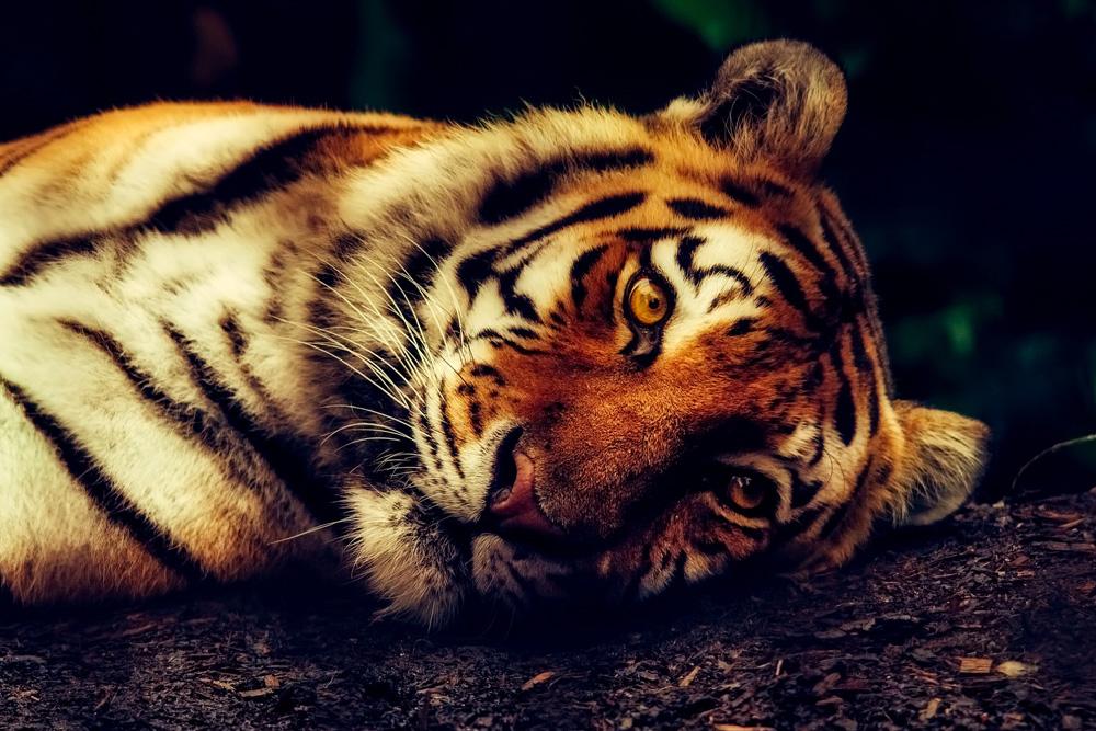 Pixabay-1-5-Amazing-Websites-for-Professional-Free-Stock-Photos copy.jpg