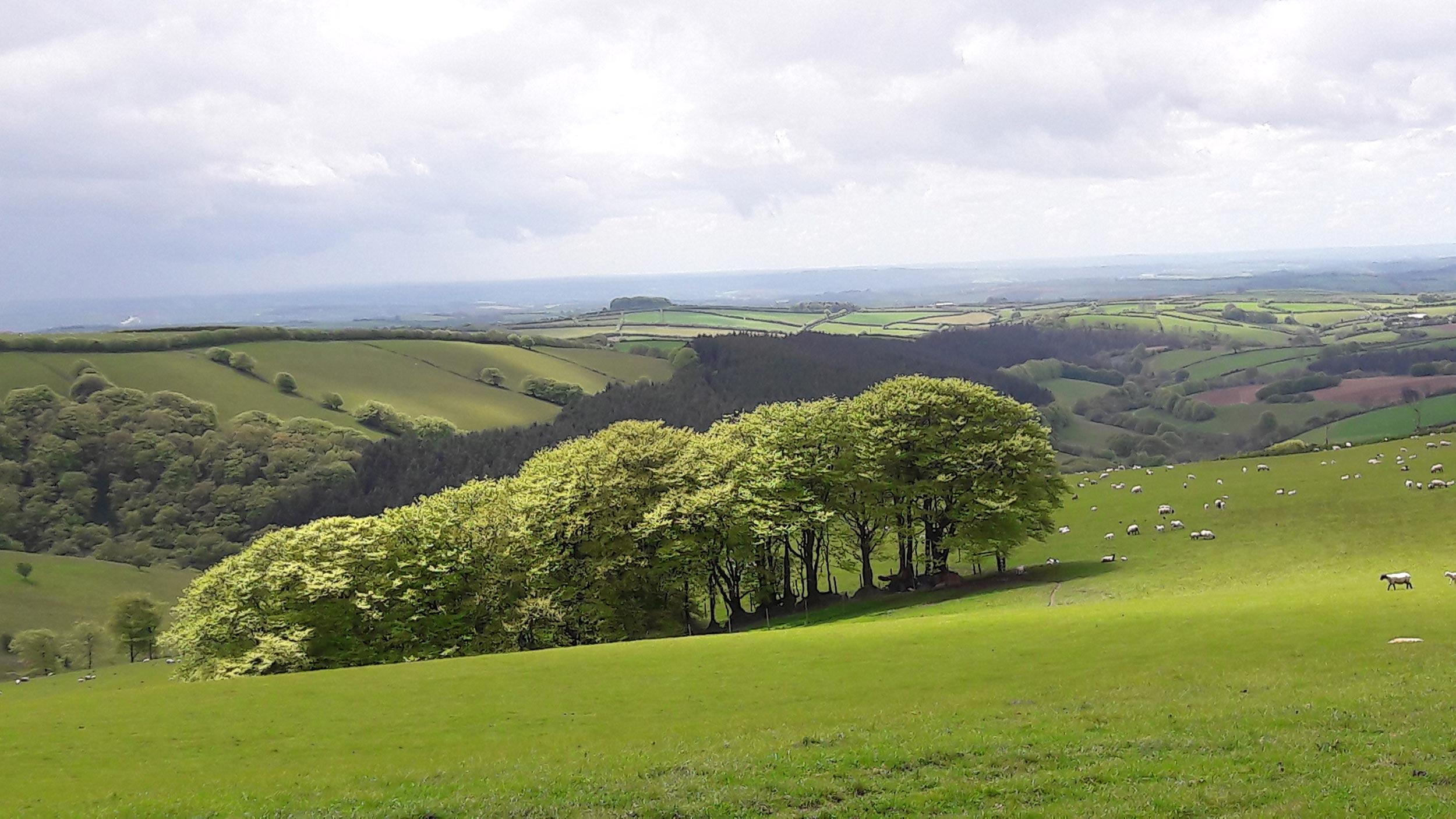 exmoor-landscape-01.jpg
