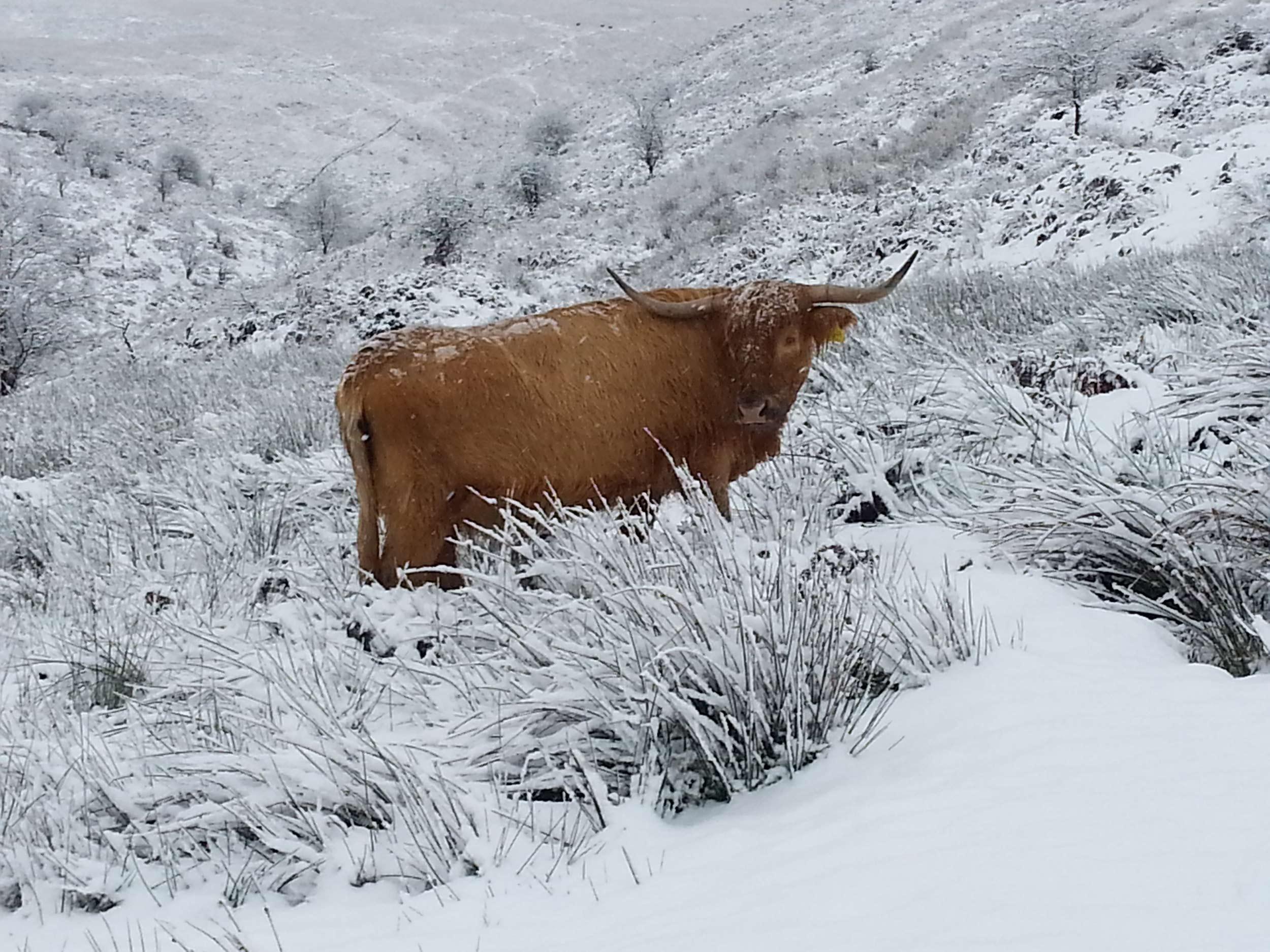 exmoor-landscape-03.jpg