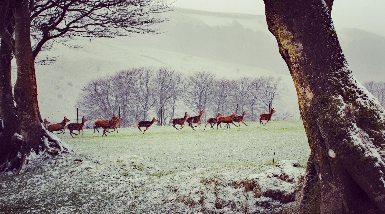 deer-feb-exmoor.jpg