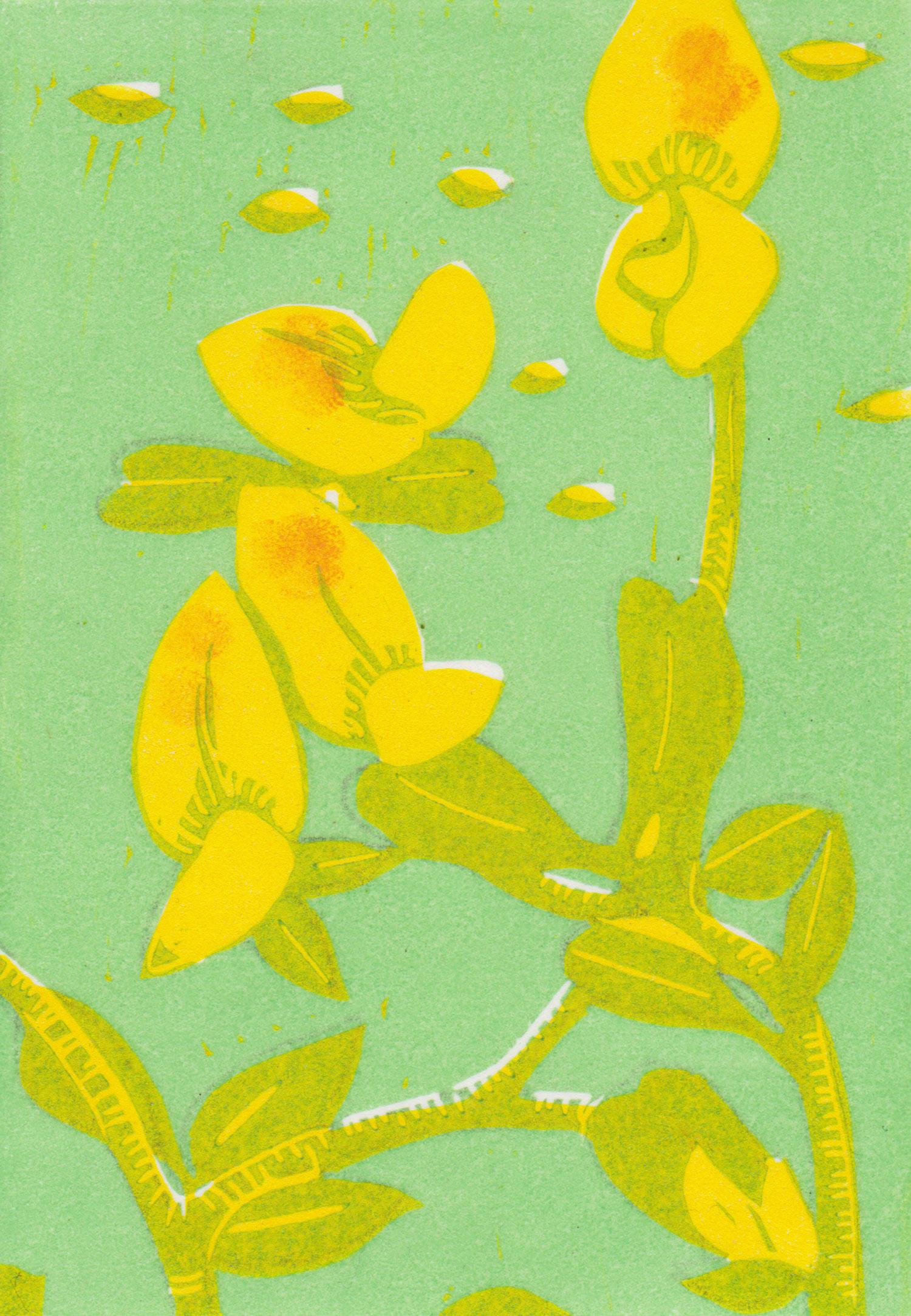 birdsfoot-trefoil-linocut-print.jpg