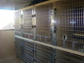 FP-Cat-Condos-300x225.jpg