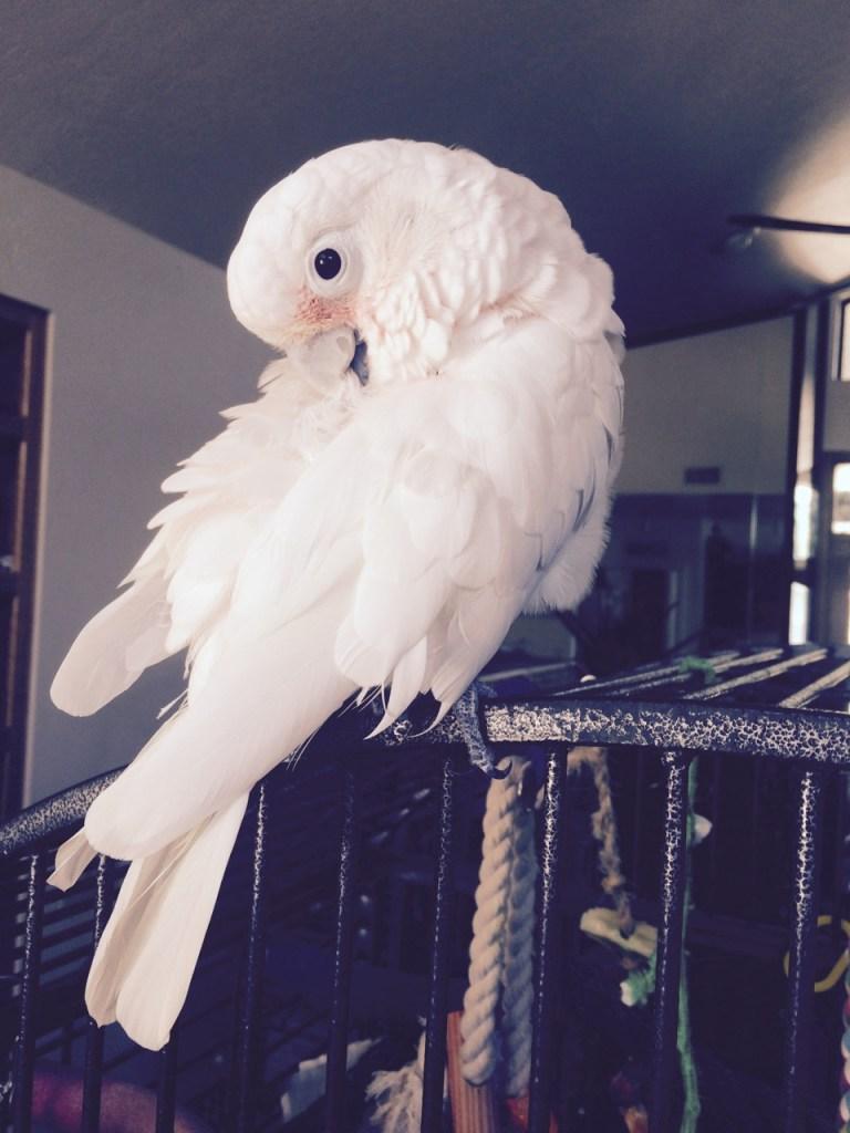 Yes, I am gorgeous! – September 1, 2015