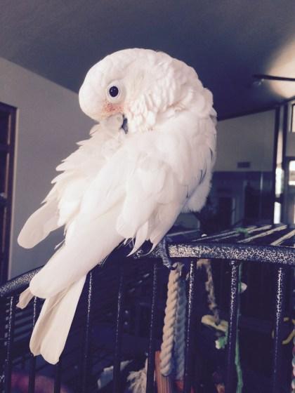 HAB-Lilly-preen-8-28-2015.jpg