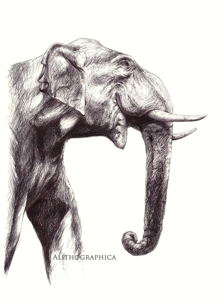 Jenn-elephant-signed.png