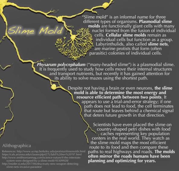 JMD slime mold 1.png