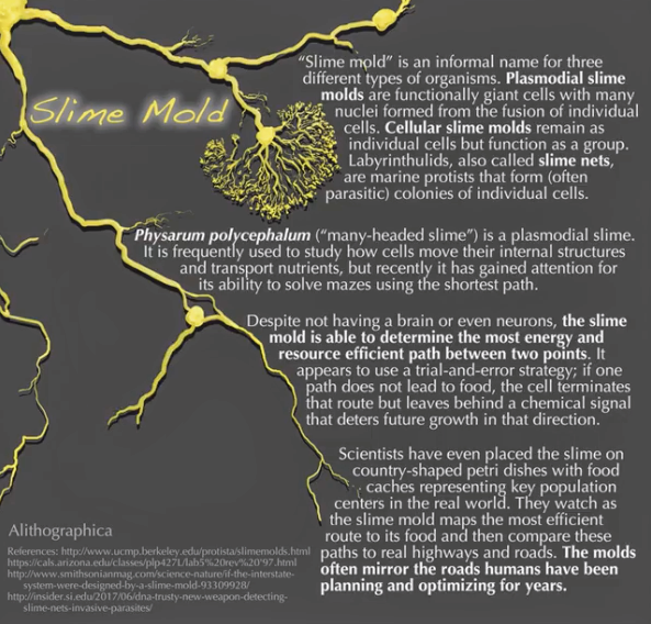 JMD slime mold 3.png