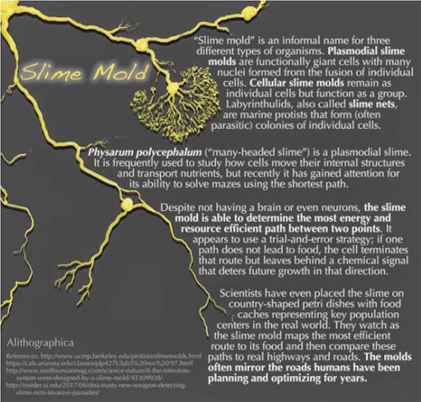 JMD slime mold 4.png