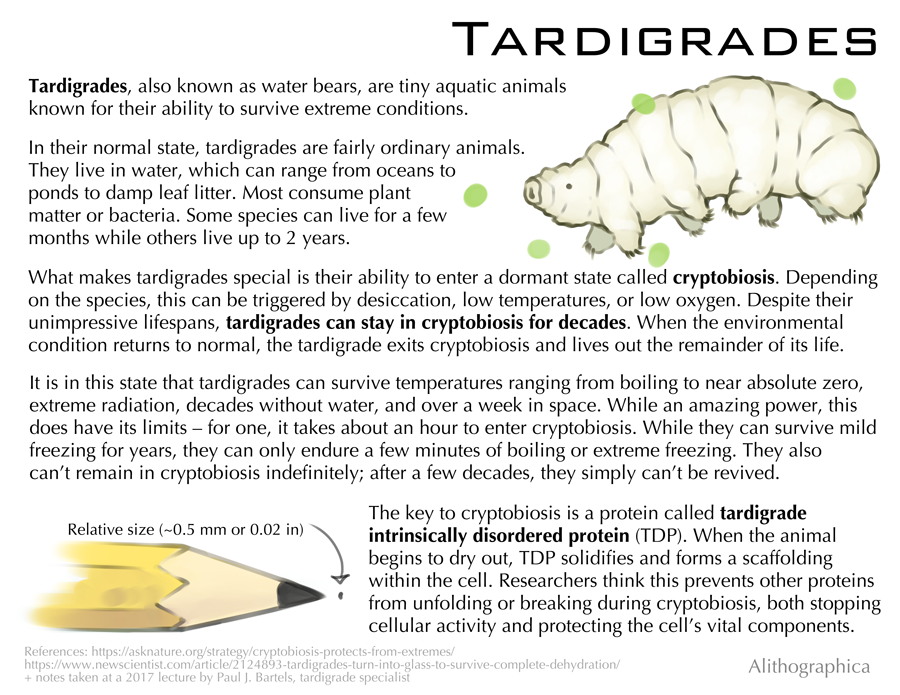Alithographica Art  ·  July 6,2018  ·     I do not want to rain on the tardigrade parade, but…I'm gonna rain on the tardigrade parade.  Don't get me wrong - cryptobiosis is incredibly cool! We can learn SO many things from studying tardigrades (they also have a weird protein that helps protect against radiation damage??). But being able to put yourself in stasis to survive something is not the same as being adapted to live in that environment, and even in cryptobiosis tardigrades can and do die. They're tough but by no means indestructible.  (that said there's still an awesome shirt out there that says live tiny die never and I still want it very badly when will it come back to print)  Support Science Fact Friday on Patreon:  https://www.patreon.com/alithographica