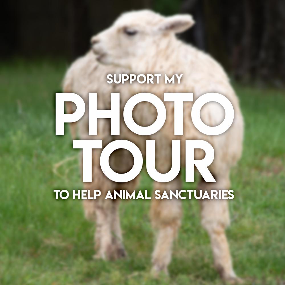 Sanctuary website.jpg