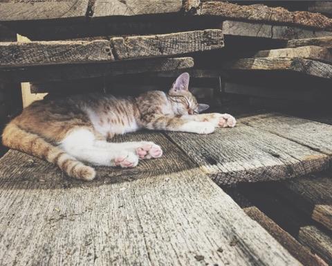 wood shop cat bolivar mo