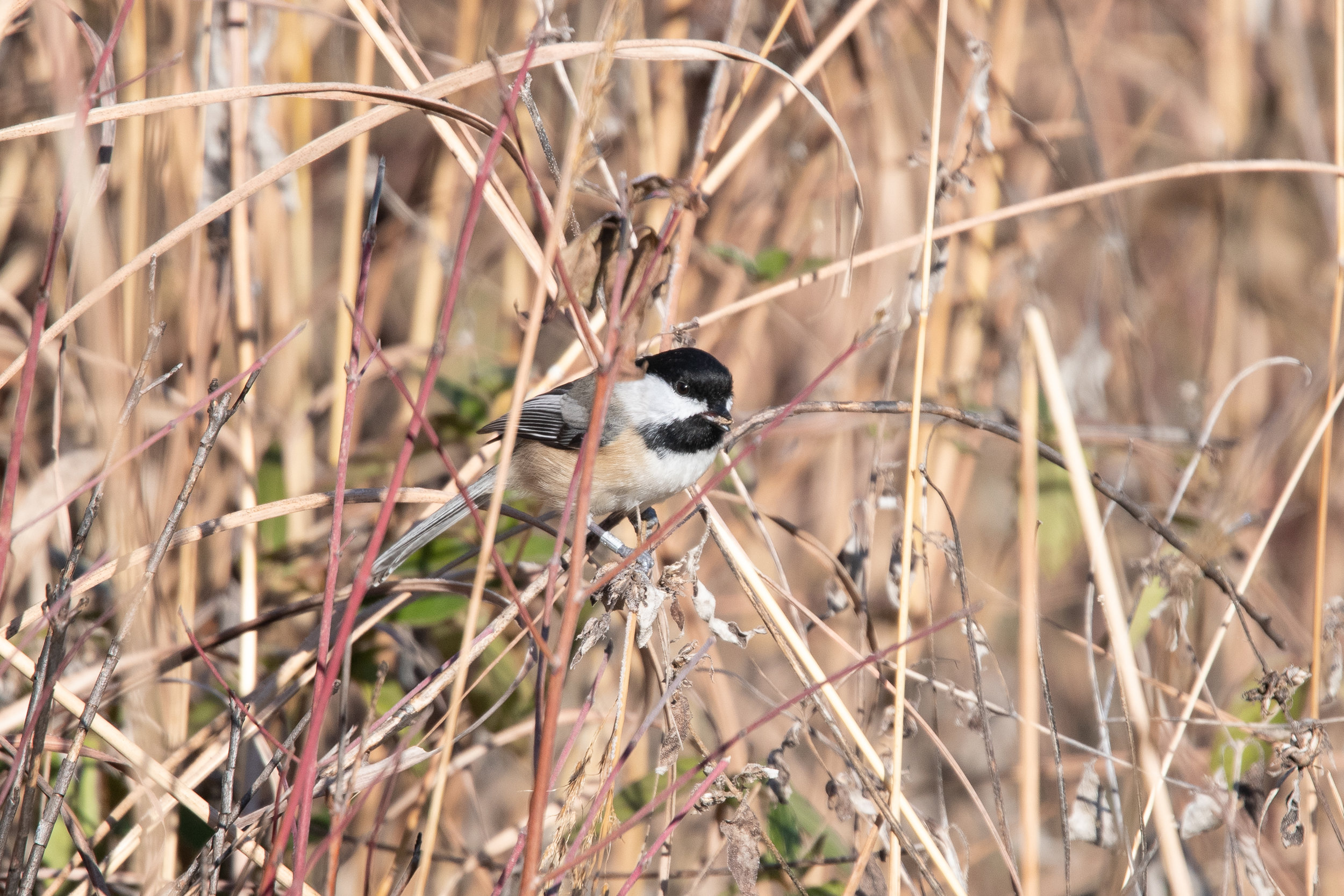 martha-lafite-birds-8-of-37_45175547214_o.jpg